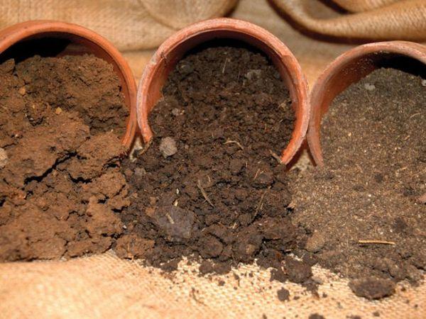 Смотреть Размножение фикуса в домашних условиях видео