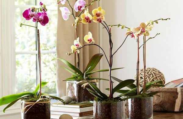 горшок орхидея