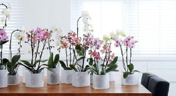прозрачный горшок орхидея