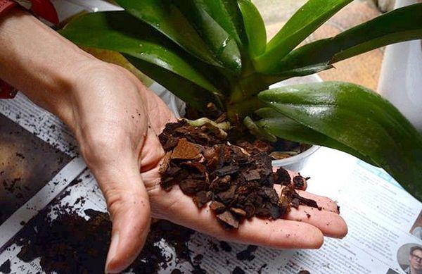 грунт орхидея