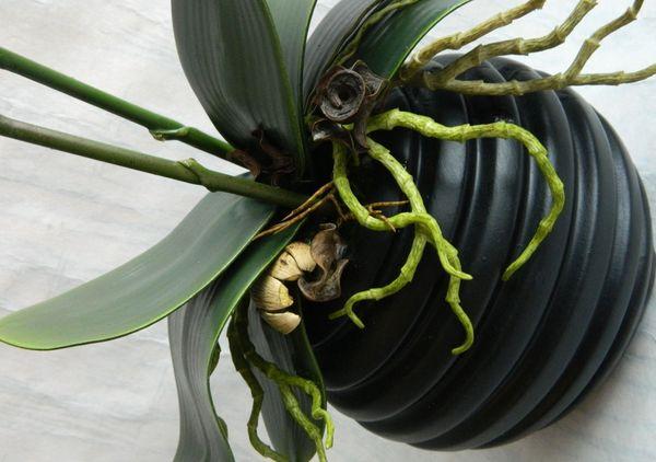 плохой горшок для орхидеи
