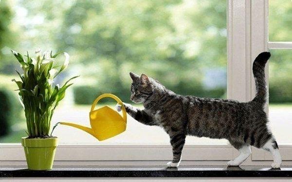 домашние цветы полив