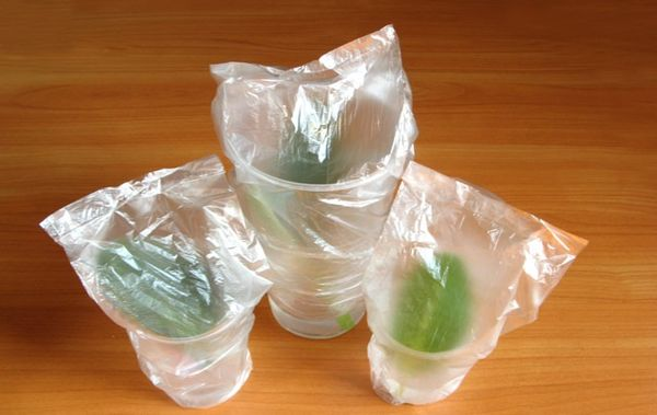 глоксиния пакет