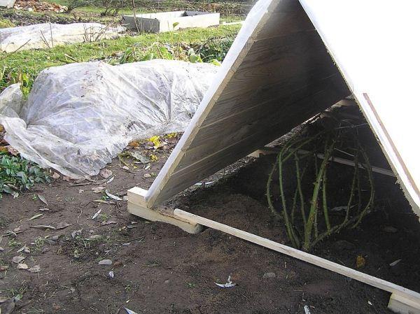 При использовании воздушно-сухого метода укрытия кустовых роз сооружают из деревянных щитов шалаш и укрывают сверху пленкой