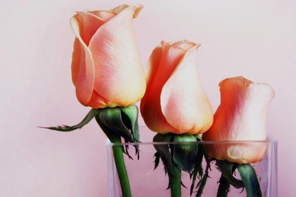 Срезанные голландские розочки обладают высокой стойкостью и способны простоять в вазе не менее двух недель