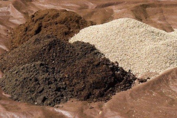 Для Каланхоэ Дегремона подходит уже готовая почва для суккулентов или кактусов