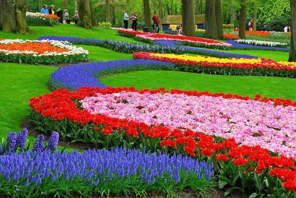 Карликовые тюльпаны сажают на переднем плане среди низкорослых многолетников