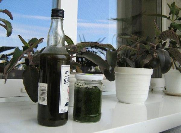 Спиртовая настойка усиливает лечебные свойства каланхоэ, продлевает его срок годности после среза