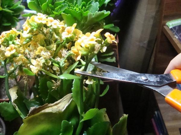 Благодаря обрезке можно придать растению красивую форму куста
