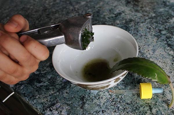 Приготовление сока Каланхоэ
