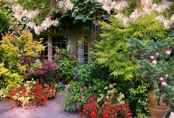 Фуксия пригодна для культивирования в качестве декоративной садовой культуры, поэтому красивоцветущее растение широко используется в ландшафтном дизайне
