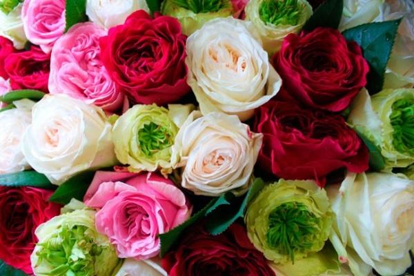 Лучшие сорта роз Дэвида Остина для выращивания в Подмосковье