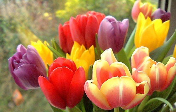 Тюльпаны разных цетов