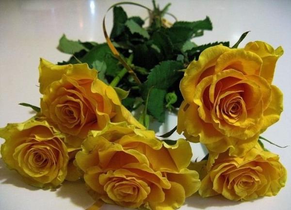 Желтые розы означают счастье, энергичность, жизненную силу, радость, восхищение, восторг, преклонение