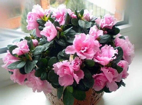 экзотические комнатные цветы фото описание