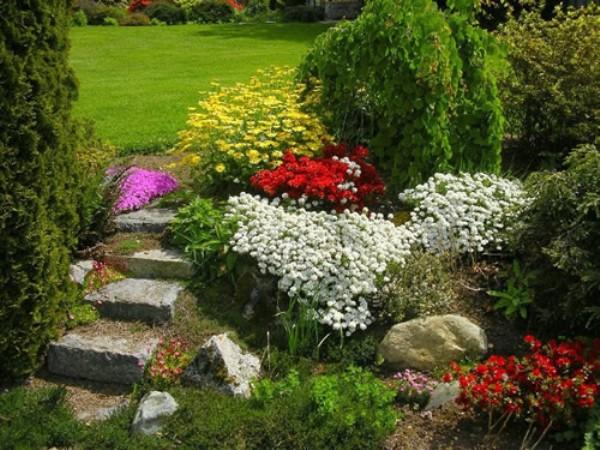 Пиретрум Девичий нашел свое применение в украшения садов и парков
