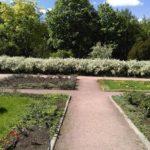 В городских условиях растение используют как живую изгородь у административных и детских учреждений