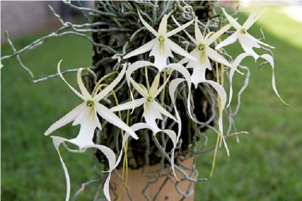 Виды орхидей фото и названия по листьям