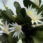 Комнатные кактусы