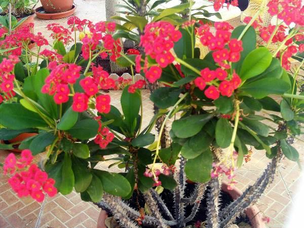 Комнатные цветы гипоаллергенные