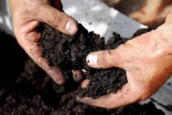 почва руки