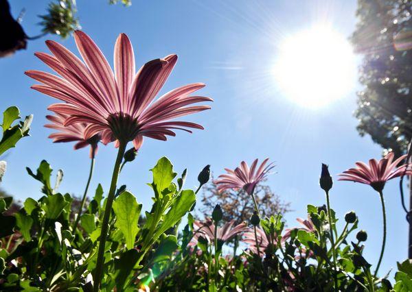 яркое солнце огород