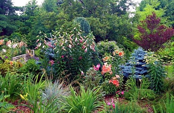 Лилия станет украшением любого дачного участка или сада