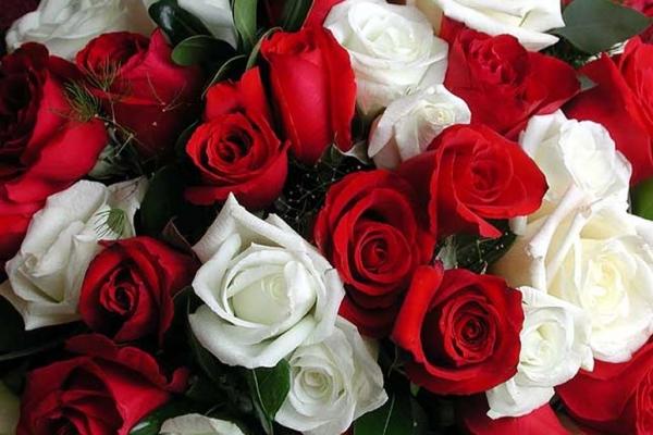 Комбинация красных и белых роз – выражение гармонии и единства в любви