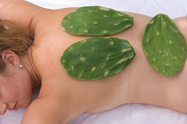 Листья Опунции используют для массажа