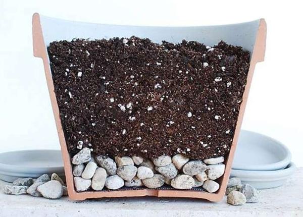 Почва для алоэ должна быть слабокислой или нейтральной, воздухопроницаемой и хорошо пропускать воду