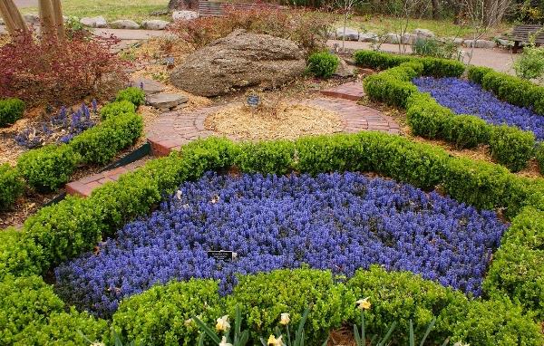 Рядом с Живучкой лучше высаживать равносильные растения