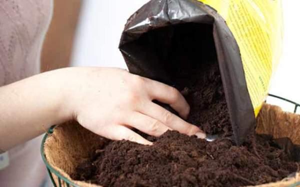 Платицериум хорошо растет в субстратах, в состав которых входит торф, листовая и хвойная земля, дробленый сфагнум в пропорциях 2:2:2:1