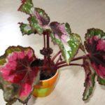 Цветок вянет из-за чрезмерного полива