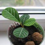 Молодой росток из семени