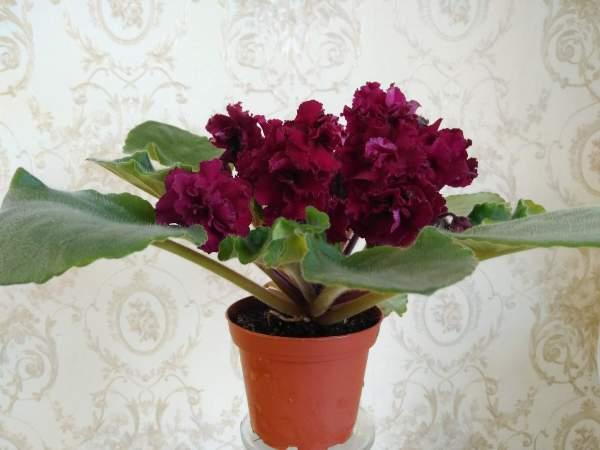 Цветущая АВ-Богема