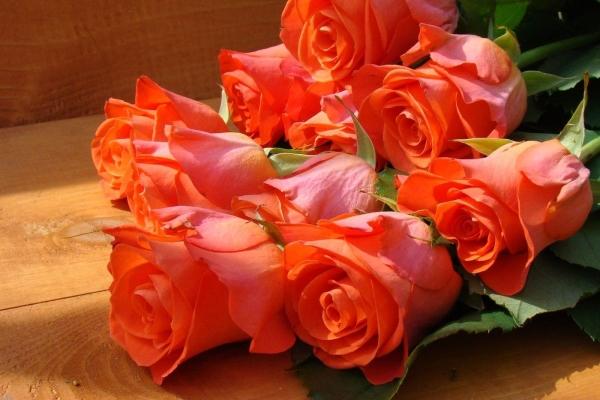 Коралловые розы и их значение на языке цветов