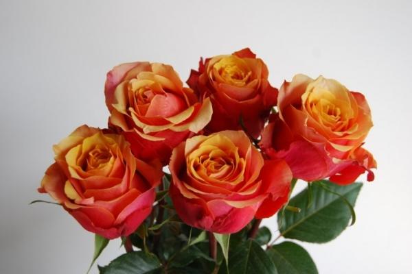 Букет должен состоять из четного количества цветов