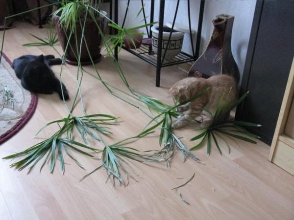 Жесткие листья драцены могут навредить животному