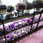 Профессиональный стеллаж в магазине цветов