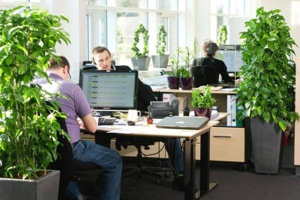 Какие цветы держать в офисе