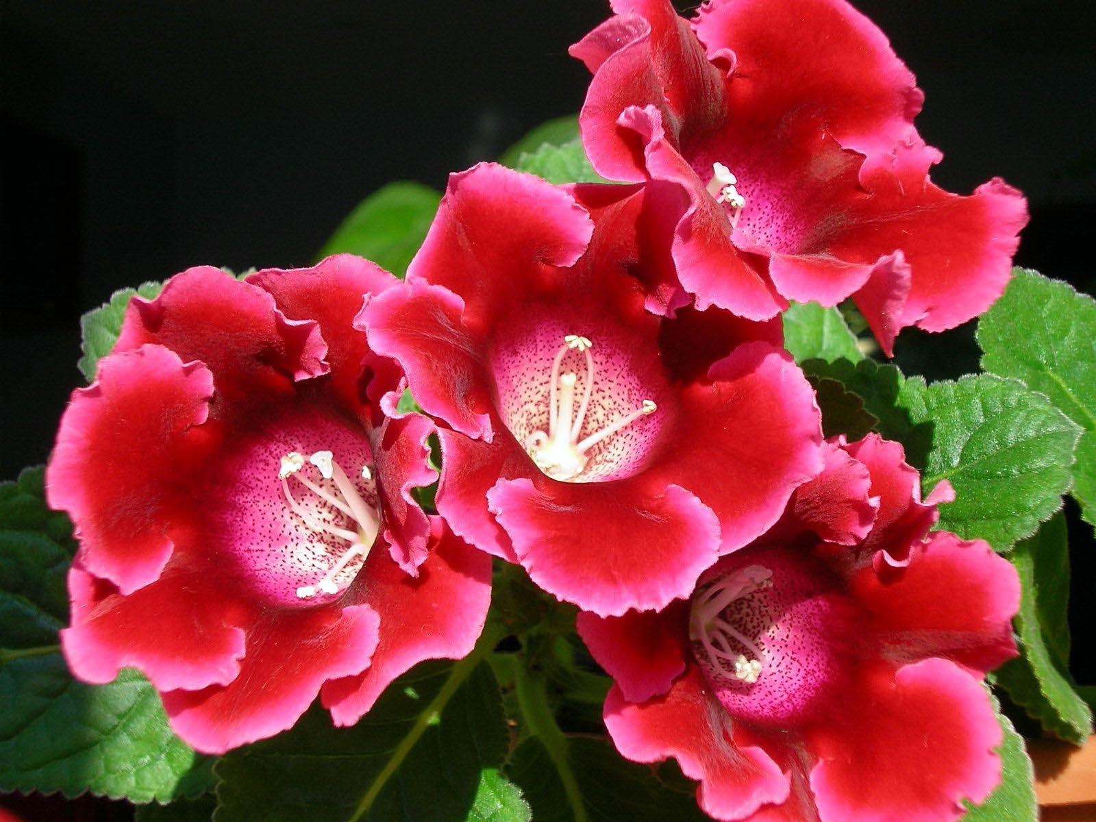 Все фото с цветами розового лилового цвета