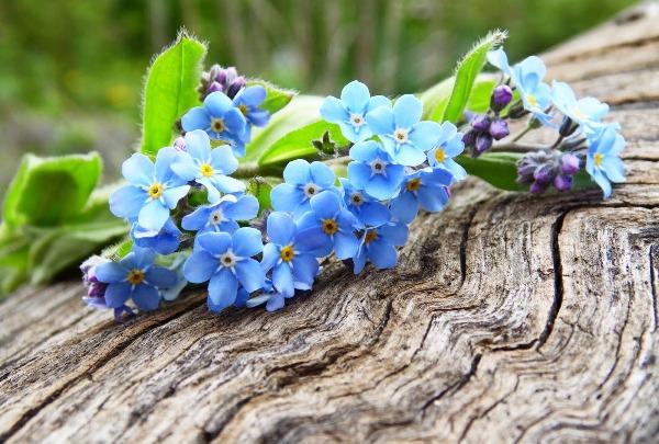 Растения с голубыми цветами