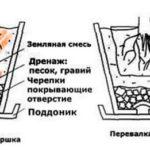 Подготовка горшка к пересадке