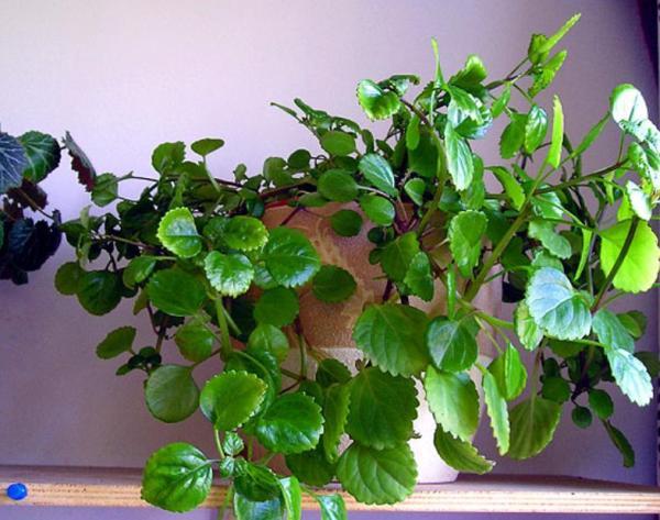 Хорошее освещение - необходимое условия для красивого растения