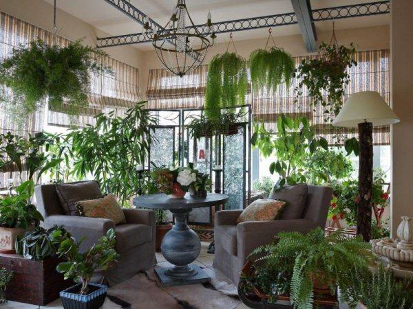 10 самых опасных ядовитых комнатных растений: описание, названия и фото