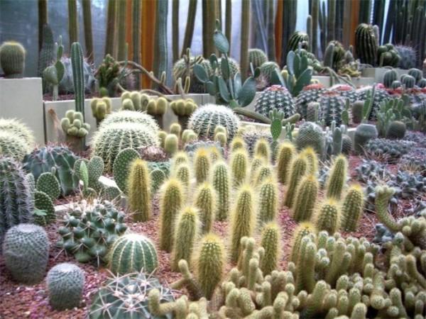 Разнообразные формы кактусов