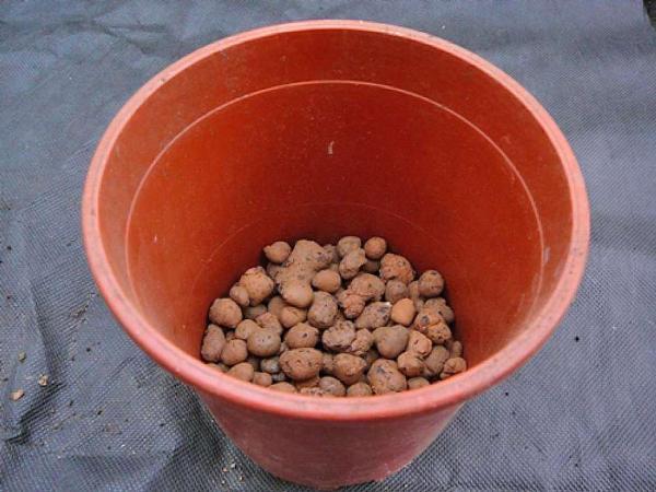 Керамзит в качестве дренажа для молочая тирукалли