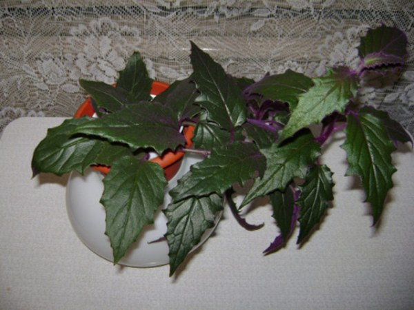 мятный френч с цветами фото