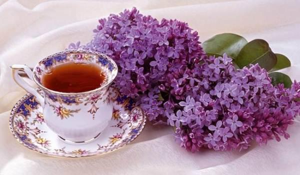 Чай из сирени полезен при простудных заболеваниях, туберкулезе легких, камнях в почках и поносе
