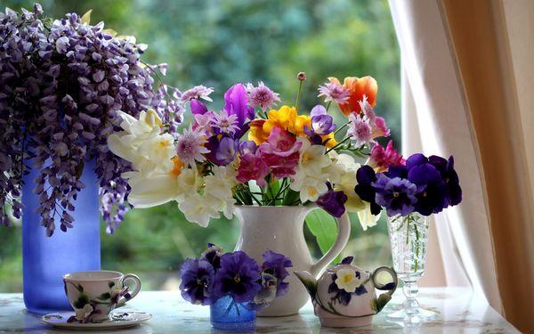 цветы окно